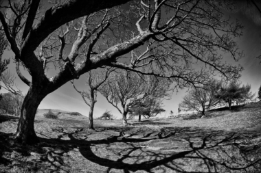 shadows_of_trees